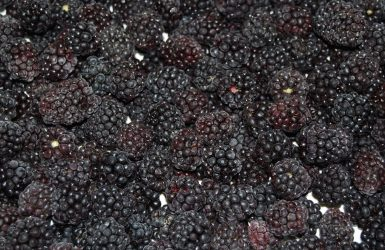 Blackberry Haba Foods
