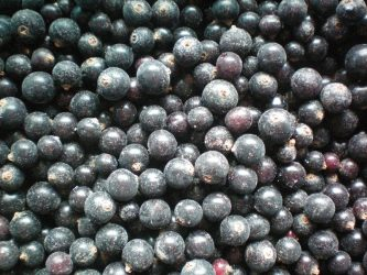Blackcurrant Haba Foods